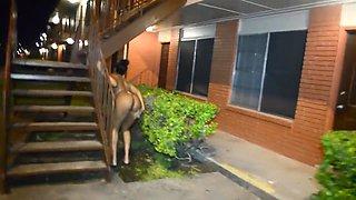 Hazel cumings walk naked outside and strange dude follows her around.